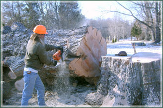 Chainsaw on large tree